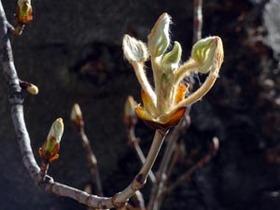 Genève souhaite la bienvenue au printemps