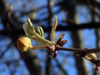 Le printemps Genevois