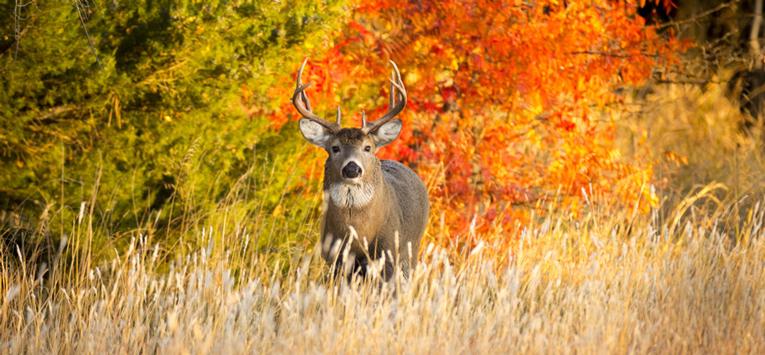 Interdiction de la chasse : l'exemple genevois